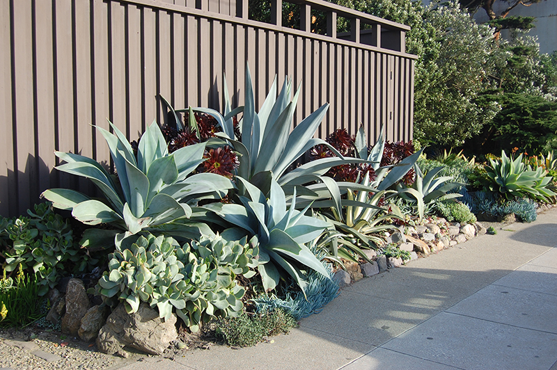 Xeriscaping-centers
